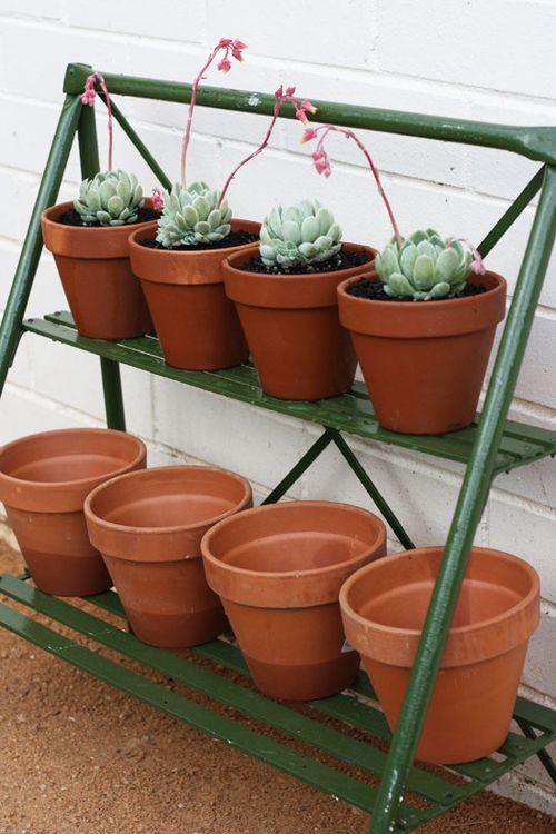 Potplants